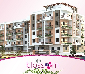 Anjan Blossom Flagship