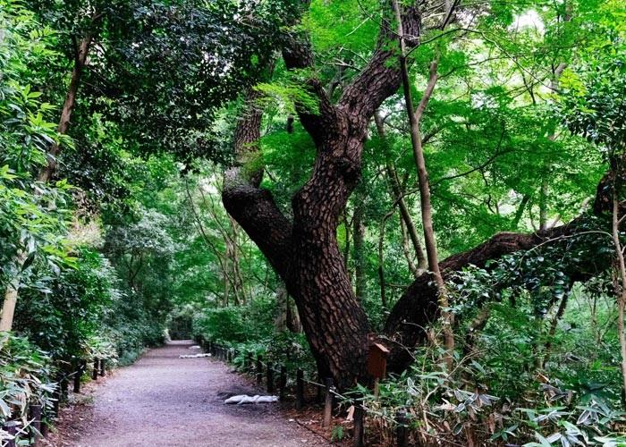 kalpataru jade residences g amenities features4